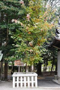shrine1.jpg