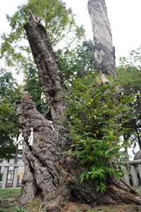 shrine4.jpg